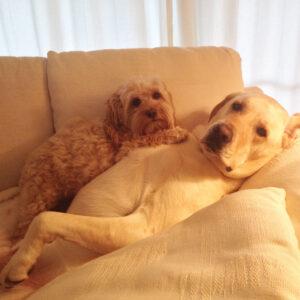 130481-Cuddling-Dogs